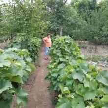 Monori Györgyné kertje