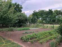 Bariné Grizák Zsuzsanna kertje